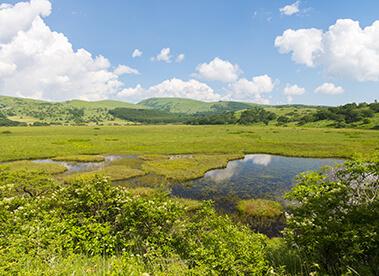 Yashima Wetland